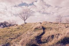 Homage to Wyeth (Sarah Hina) Tags: andrewwyeth homage radarhill theridges ohiouniversity athensohio winter bleak