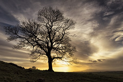 The Sentinal (TrotterFechan) Tags: tree sunset clouds