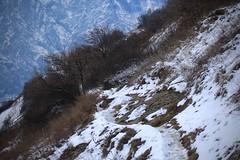 Branson (bulbocode909) Tags: valais suisse branson fully nature montagnes sentiers arbres hiver neige