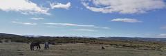 CABALLOS (EL VIAJERO MOTERO) Tags: naturaleza nature canon canon450d viajes viajeros nationalgeographic caballos huaweip9