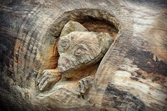 Peering Out (MTSOfan) Tags: carving animal art sculpture burrow log wood