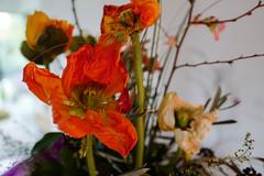 Poppy (Juergen Bamberg) Tags: leica leicaq poppy bokeh 28mm red flowers makro