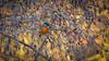 Mit diesem Blauen Edelstein, heute bei untergehender Sonne aufgenommen, wünsche ich euch einen schönen und besinnlichen Jahresausklang und ein gesundes und glückliches Neues Jahr (AchimOWL) Tags: eisvogel deutschland tiere lumix tier vogel outdoor wildlife gx8 wasser sonnenuntergang kingfisher ngc natur nature alcedoatthis königsfischer teich