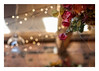 363/366: Festive bokeh (judi may - mostly off for a while) Tags: 366the2016edition 3662016 day363366 28dec16 bokeh dof depthoffield plant leaves decoration lights photoborder canon7d 50mm