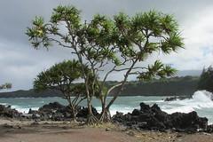 Road to Hana - Ke'anae Peninsula (Stabbur's Master) Tags: hawaii hawaiianislands maui hawaiicoastline pacificocean roadtohana keanaepeninsula keanae lavarocks