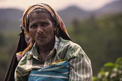 India (♫♪♭Enricodot ♫♪♭) Tags: enricodot tea picker woman women worker india southindia