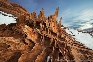 Desert Fins