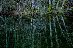 Land (Dex Horton Photography) Tags: land week3 artisticprocessing processing water trees lake reflection deep dark pool washingtonstate whatcomcounty dexhorton