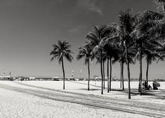 verão em preto e branco (luyunes) Tags: riodejaneiro praia leme mar verão coqueiro luciayunes motoz