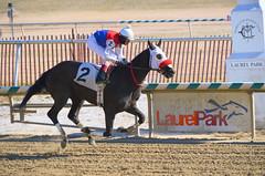"2015-02-13 (41) r3 Roimes Chirinos on #2 Royal Caviar (JLeeFleenor) Tags: photos photography md marylandhorseracing marylandracing laurelpark jockey جُوكِي ""赛马骑师"" jinete ""競馬騎手"" dżokej jocheu คนขี่ม้าแข่ง jóquei žokej kilparatsastaja rennreiter fantino ""경마 기수"" жокей jokey người horses thoroughbreds equine equestrian cheval cavalo cavallo cavall caballo pferd paard perd hevonen hest hestur cal kon konj beygir capall ceffyl cuddy yarraman faras alogo soos kuda uma pfeerd koin حصان кон 马 häst άλογο סוס घोड़ा 馬 koń лошадь maryland"