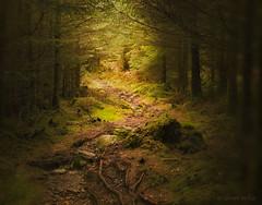 Sweet Forest Path (shawn~white) Tags: plant tree nature wales forest woodland moss place unitedkingdom path dream snowdonia beddgelert shawnwhite shawnraisindp