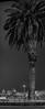voodoo warning (pbo31) Tags: sanfrancisco california city urban blackandwhite panorama motion black tree june skyline night dark nikon treasureisland traffic large panoramic palm stitched d800 2015 lightstream boury pbo31