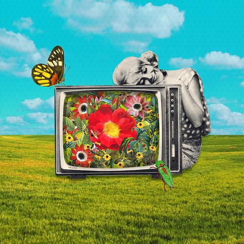 Sammy Slabbinck - TV Nation