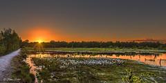 Wittmoor - 09061510 (Klaus Kehrls) Tags: abend sonnenuntergang hamburg natur moore seen landschaft idylle gewässer wittmoor