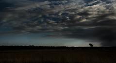 The little tree under the great sky (marielledevalk) Tags: sky tree landscape horizon cloud thunder rain weather winter nature
