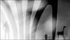 F_47A5342-BW-2-Canon 5DIII-Canon 70-300mm-May Lee 廖藹淳 (May-margy) Tags: maymargy letgo 放手 bw 黑白 人像 木馬 欄柱 樹葉 重複曝光 模糊 散景 街拍 streetviewphotographytaiwan 線條造型與光影 linesformandlightandshadows 天馬行空鏡頭的異想世界 mylensandmyimagination 心象意象與影像 naturalcoincidencethrumylens 台東縣 台灣 中華民國 doubleexposure blur bokeh divider humaningeometry leaves f47a5342bw2 portrait mothergirl 母女 toy horse good time clouds taitungcounty canon5diii canon70300mm maylee廖藹淳