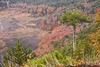 Paraísos Sudamericanos (Gustavo Nudo (Guslight)) Tags: sudamerica chile sur bosque nature ilovenature paisaje guslight gustavonudo natgeo nationalgeographic americadelsur araucarias