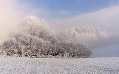 *Magic of Winter* (albert.wirtz) Tags: albertwirtz nikon d810 eifel vulkaneifel eifelsteig moseleifel eifelmosel deutschland germany rheinlandpfalz rhinelandpalatinate winter schnee raureif sonne hoarfrost wald bäume trees bushes meadow nebel mist nebbia niebla brume fog bluesky wonderland