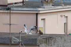 Dynamic stretching a due, sul tetto..:-) (Carla@) Tags: liguria italia europa canon mfcc