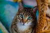 Little Seppi (tina djebel) Tags: 50mm katzen cat cats chat pet pets animal animals tier tiere nikon dslr d7000