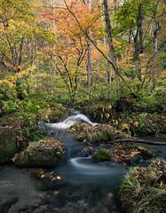 十和田 - Swirl (Eled) Tags: japan tohoku aomori river swirl 日本 東北 青森 川 秋 紅葉 autumn fall