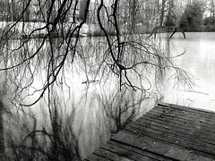 Experiments in b&w - frozen pond - No People Nature Tree Close-up Day Outdoors Backgrounds Sky Pond Frozen Lake Blackandwhite Black&white Blackandwhitephotography Cold Temperature Winter (markjowen66) Tags: nopeople nature tree closeup day outdoors backgrounds sky pond frozenlake blackandwhite blackwhite blackandwhitephotography coldtemperature winter