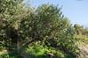 Ψίνθος (Psinthos.Net) Tags: ψίνθοσ psinthos winter january ιανουάριοσ γενάρησ χειμώνασ φύση εξοχή countryside nature afternoon απόγευμα απόγευμαχειμώνα χειμωνιάτικοαπόγευμα ουρανόσ sky bluesky γαλάζιοσουρανόσ δέντρο tree θάμνοσ shrub leaves φύλλα winterleaves φύλλαχειμώνα χειμωνιάτικαφύλλα κλαδιά branches treebranches κλαδιάδέντρου light shadow φώσ σκιά φώσήλιου φώσηλίου sunlight χόρτα greens βράχοσ βράχοι βράχια πέτρεσ stones rocks rock soil ground έδαφοσ χώμα οξαλίδεσ sorrels valley psinthosvalley κοιλάδα κοιλάδαψίνθου κοιλάδαψίνθοσ φασούλι φασούλιψίνθοσ φασούλιψίνθου κοιλάδαφασούλι fasuli fasouli fasoulivalley fasoulipsinthos fasoulipsinthou μέρα day