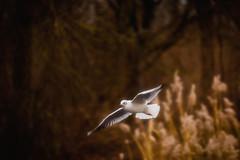 Dreaming (hans_polet) Tags: slidersundays sliderssunday 7dwf fauna brilliant