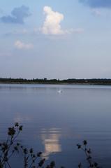 Swan essence