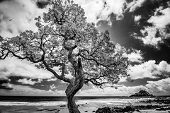 The Lightning Tree (Mark Harshbarger Photography) Tags: hawaii us places maui kokibeach roadtohana