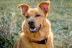 IMG_45856.jpg (Juan Mirón) Tags: fauna perros