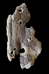 IMG_4978 (j.towbin ) Tags: macro texture nature faces holes bark minimalsim allrightsreserved