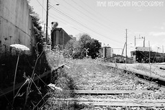 Wildflowers and Train Tracks (Jamie Hedworth) Tags: ontario canada docks industrial factory traintracks tracks wildflowers goderich jamiehedworthphotography