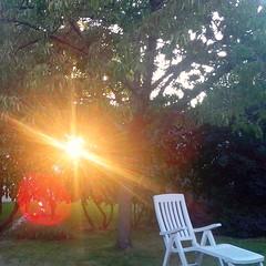 Soleil du soir dans le jardin (dbrothier) Tags: light sun evening soleil lumiere rays soir rayons