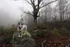 Foggy Mondays (csnyder103) Tags: petey dog rescue fog foggy trees silhouettes rocks eosm canonefm1122