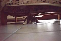 CSC_0032 (jessie_with_the_camera) Tags: bunny sofa relaxed cute kawaii pets animals animal nikon morning sleeping sleep