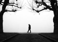 (Magdalena Roeseler) Tags: street strassenfotografie streetphotography strasse fog foggy people candid zugersee zug switzerland walk olympus blackandwhite monochrome alone