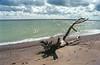 1985-09-00 Kanada (121) Lake Erie (Scan vom Negativ) (mike.bulter) Tags: baumstamm beach can canada cloud clouds eriesee kanada lakeerie stamm strand treetrunk wolke wolken