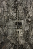 (eflon) Tags: wood plywood contrast print texture