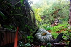 Trail blockage (TJ Gehling) Tags: trail path terracecutofftrail elcerrito elcerritohills pumpkin elcerritotrailtrekkers trailtrekkers