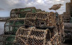 Conwy Harbourfront (_honez) Tags: crab pot crabpot conwy harbour harbor harbourfront seagull gull fishing sea ocean north wales northwales boat seafood