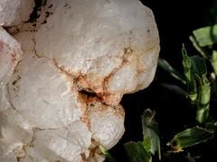 """mineral"" (carlos mancilla) Tags: raynoxdcr250 mineral piedra stone macro olympussp570uz textura"