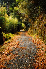The Road to Somewhere (seancheng0731) Tags: road mountain way path taiwan nantou leaves tree 步道 山 台灣 南投 奇萊南華 落葉 樹