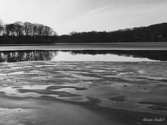 January thaw... (briansudol1961) Tags: thaw ice newjersey reflection clouds water lake sky trees bw