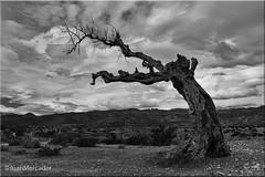 Dark (juanmerkader) Tags: almería almería´ andalucía andalusia desert desierto desiertodetabernas españa europe naturaleza nikond750 photoalmería photovida picture tabernas travel nature nikon pic picofftheday