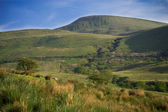 Beacon (JDWCurtis) Tags: brecon breconbeacons breconbeaconsnationalpark nationalpark mountains mountain mountainside wales southwales powys park nature outside countryside country tree trees grass green skyblue sky blue bluesky