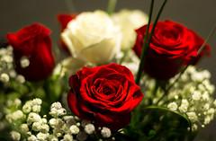 Love & desire (marcmayer) Tags: red white roses rot weis rosen liebe desire love nikon d5200 nikkor 50mm f18 bokeh blume flower nature natur