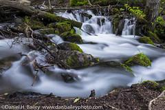 Rushing Stream (Dan Bailey Photo) Tags: summer nature alaska creek landscape stream scenic anchorage