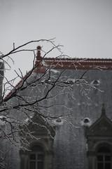 FP_3722 (ILikeTakingDigitalPhotos) Tags: winter capitol upstatenewyork albanynewyork favoritephotos 2011