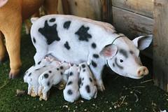 Piggies (Aussiejinjo) Tags: piggy pig nursery mama piglets gardencentre teat gardenstatue mamapig pigstatue pigornament statueofapig thomsonsgardencentre
